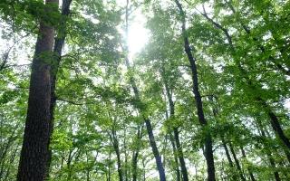 CSR/ 玉家の森づくり